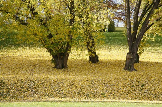Stock Photo: 4029R-281939 landscape, autumn-like, green, colorful, colored, autumn