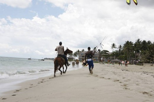 horses running on a beach in the Dominican Republic : Stock Photo