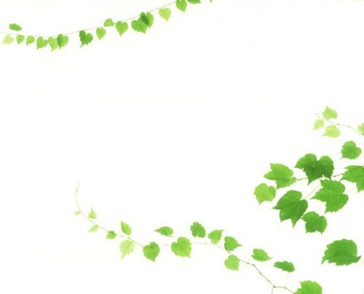 View of leaves with white background (digital composite) : Stock Photo