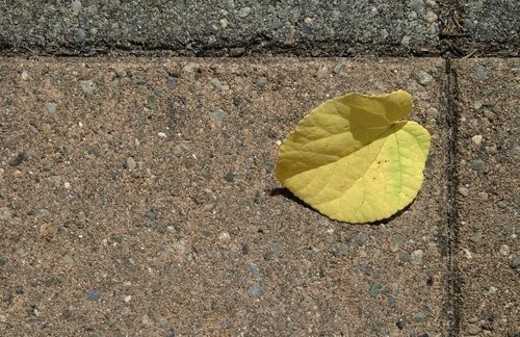 Stock Photo: 4029R-283410 Autumn leaf all alone