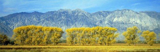 Autumn color along Highway 395, Sierra Nevada : Stock Photo