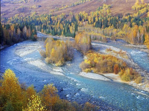 Overlook of forest and river, Hemu, Sinkiang : Stock Photo