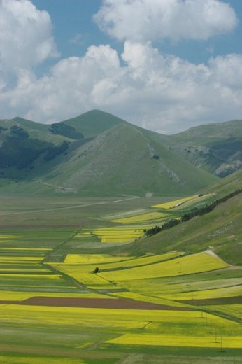 Panoramic view of lentil fields and rapeseed cultivated in mountain meadow of Piano Grande : Stock Photo