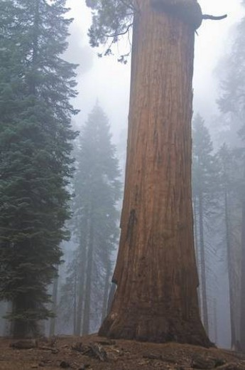Sequoia National Park, California, USA : Stock Photo