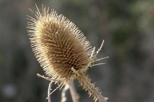 felder, wiesen, berne, blooms, blumenrfarben, botany, colored : Stock Photo