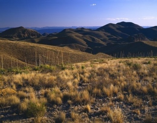 Barren landscape, Chisos Mountains, Big Bend National Park : Stock Photo