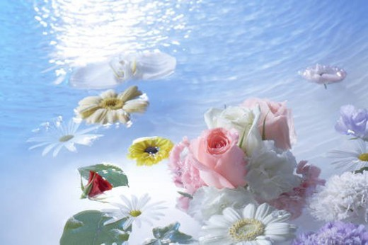 Flowers and leaves floating on water : Stock Photo