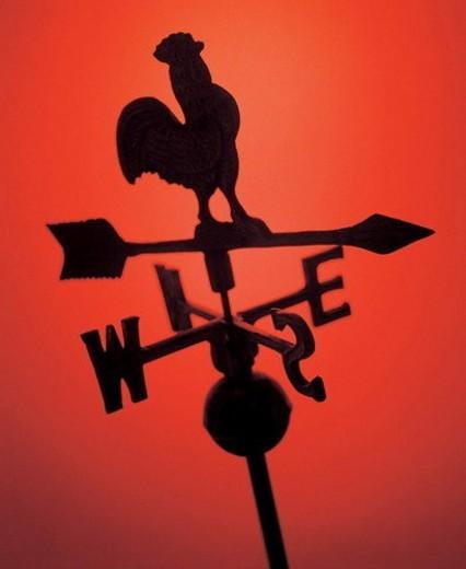arrows, bird, angle : Stock Photo