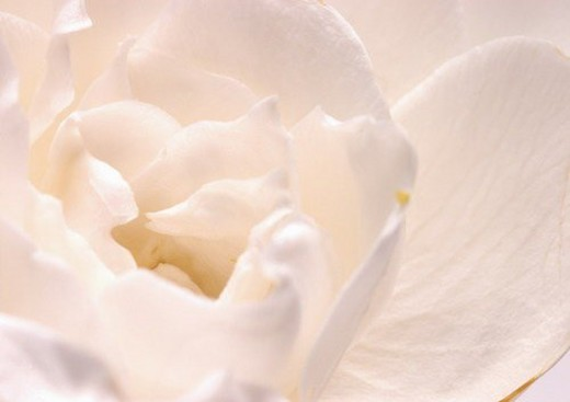 Stock Photo: 4029R-31182 beautiful, beauty, blooming