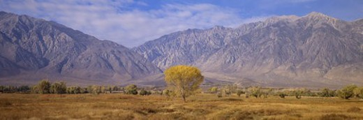 Autumn color along Highway 395 : Stock Photo