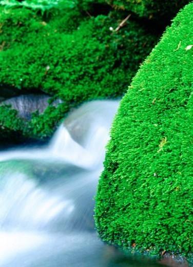 moss, scenery, valley, stone, water, green, nature : Stock Photo