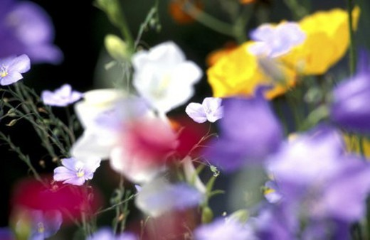 blossom, background, blooms, bloom, Bernhard, abloom : Stock Photo