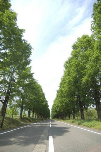 Stock Photo: 4029R-324958 Treelined country road