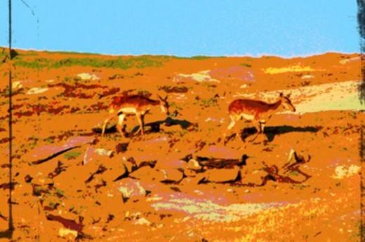 two deer : Stock Photo