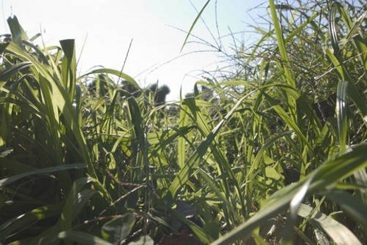Stock Photo: 4029R-330294 Grass