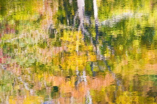 Autumnal trees reflected in pond, Takashima, Shiga Prefecture, Japan : Stock Photo