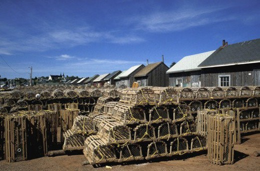 Stock Photo: 4029R-339431 Rows of lobster pens