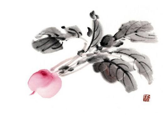 Stock Photo: 4029R-339771 Radish, ink brush painting, white background, cut out
