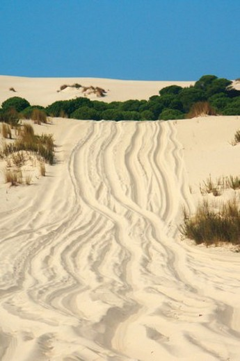 Spain, Andalucia, Andalusia, Huelva, National park, Park, Doñana : Stock Photo