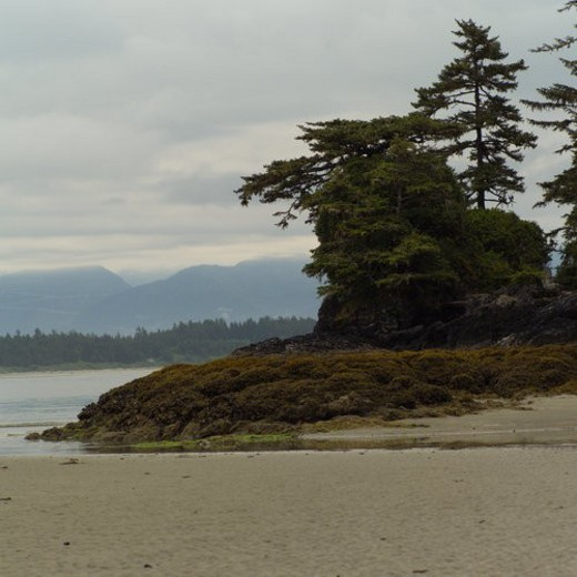 Stock Photo: 4029R-342314 Low tide on beach, Pacific Rim National Park, Vancouver Island, Canada
