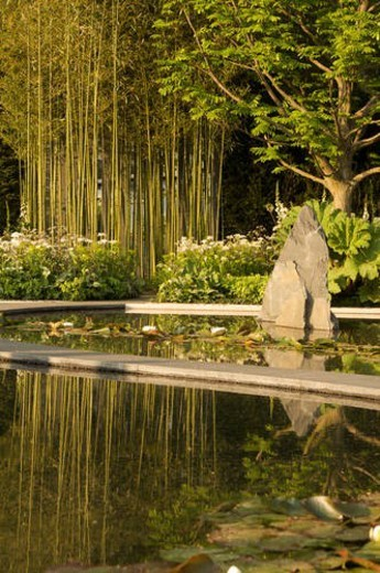 ornamental water garden with curved walkways, water lilies and bamboo, Chelsea Flower Show, late afternoon sunlight : Stock Photo
