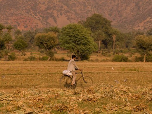 Stock Photo: 4029R-34934 Rajasthan, India - Man riding his bike through a field
