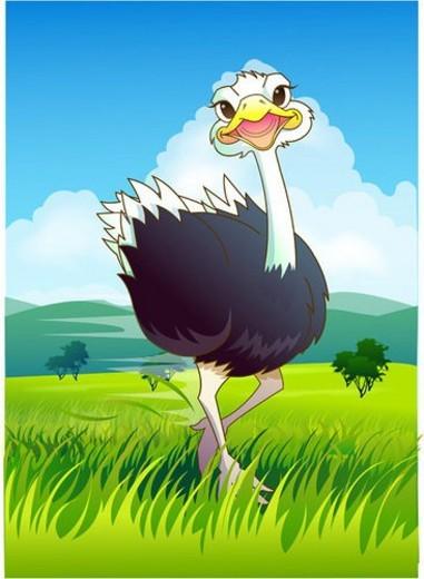 grassland, ostrich, safari, Africa, natural world, birds, zoo : Stock Photo