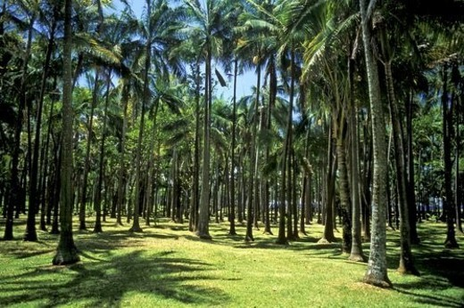 Forest, Landscape, Adventure, trip, Palm, tree, Summer : Stock Photo
