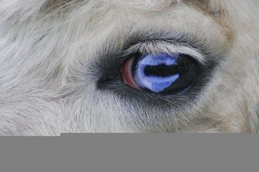 Close up of animal s eye : Stock Photo