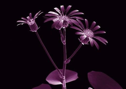 Stock Photo: 4029R-357219 representation, translucent, internal frame, illuminated, purple, structure, close-up