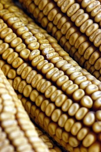 food, ingredient, food material, cuisine, corn : Stock Photo