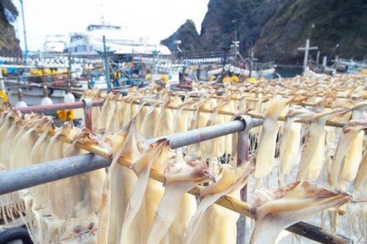 Stock Photo: 4029R-358654 squid, sea, ship, food, cuttlefish, natural