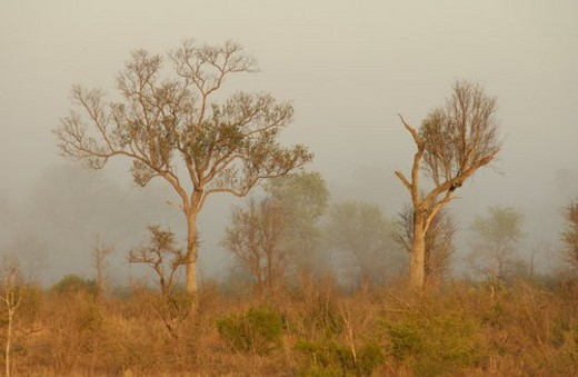 African Landscape : Stock Photo