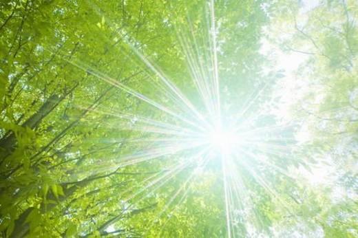 Stock Photo: 4029R-359590 Sun shining through tree canopy, Otsu, Shiga Prefecture, Japan