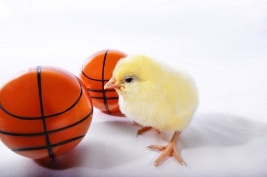 Chick with basketballs : Stock Photo
