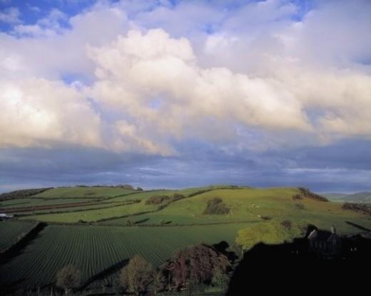 Stock Photo: 4029R-362111 Fields around Dunamace, Co Laois, Ireland
