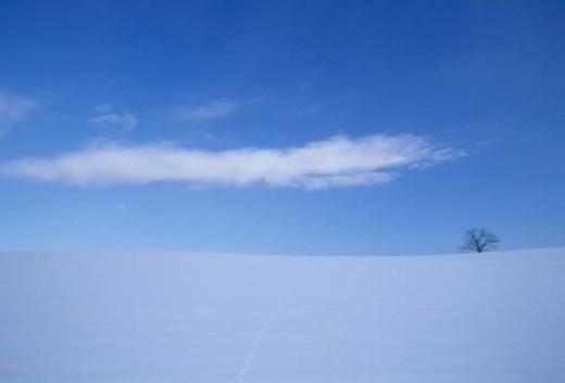 Single tree on snowy field : Stock Photo