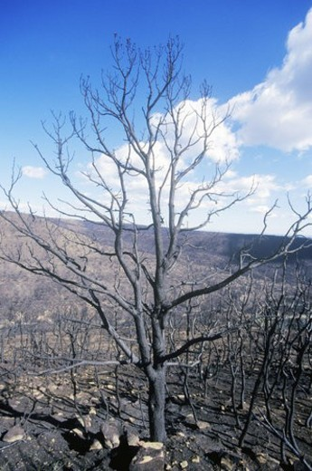 Burnt Trees, Mesa Verde National Park, Colorado : Stock Photo
