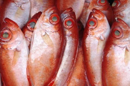 Close-up of raw fish : Stock Photo