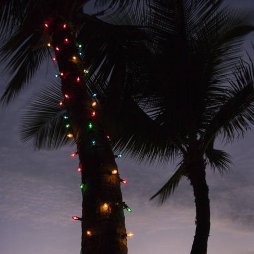 Festive colored lights wrapped around trunk of palm tree at beach. : Stock Photo