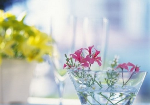 Stock Photo: 4029R-381800 Flowers in Glass, Close Up, Differential Focus, In Focus, Out Focus