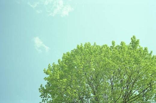 Green tree and blue sky : Stock Photo