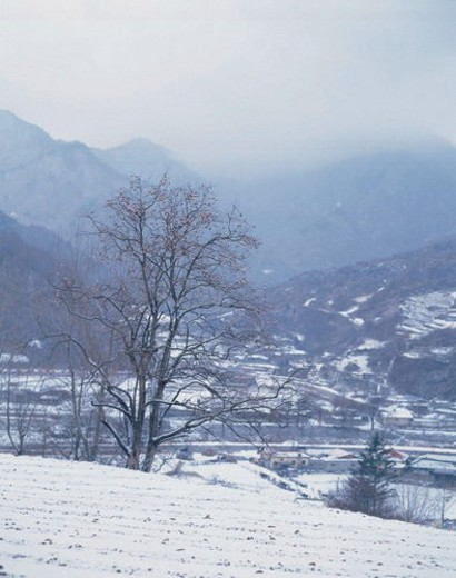 season, scenery, snow, tree, field, winter, nature : Stock Photo