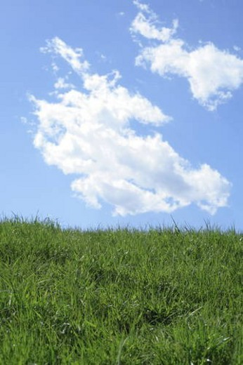 Field under blue sky, Tokyo prefecture, Japan : Stock Photo