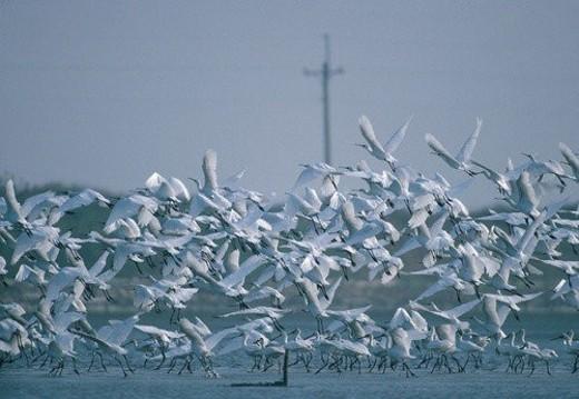 Stock Photo: 4029R-386059 river, bird, daytime, nature, mountain, animal