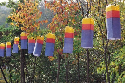 plants, Korean images, plant, hanging lantern, hand-lantern, Korean image : Stock Photo