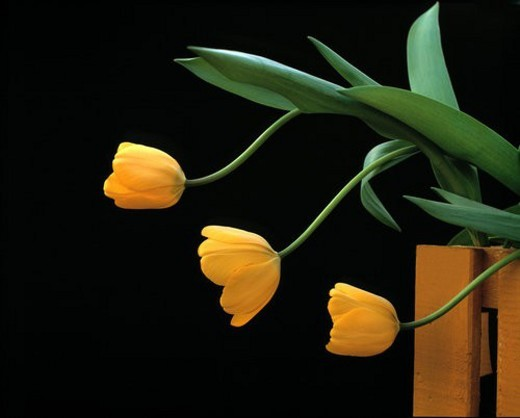 Stock Photo: 4029R-39395 Close shot of yellow flowers