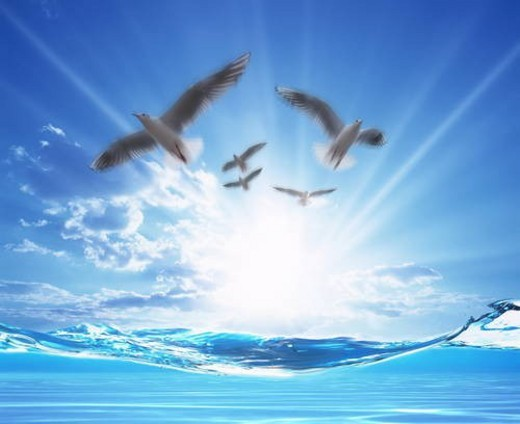 Seagulls flying over sea in sun : Stock Photo