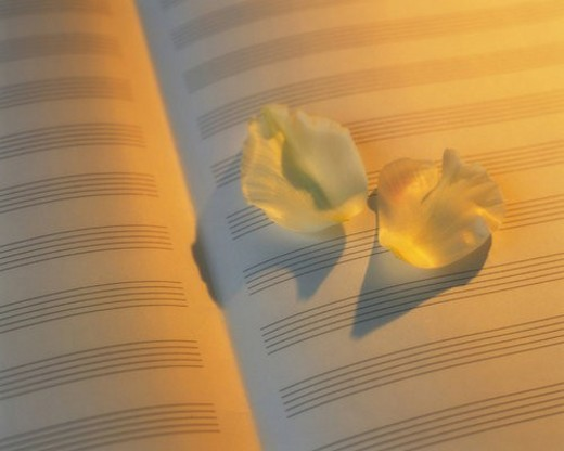 Flower petals on the musical score, Close Up, High Angle View : Stock Photo