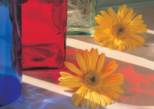 , sun flower, sun light, flower, plant, shadow : Stock Photo